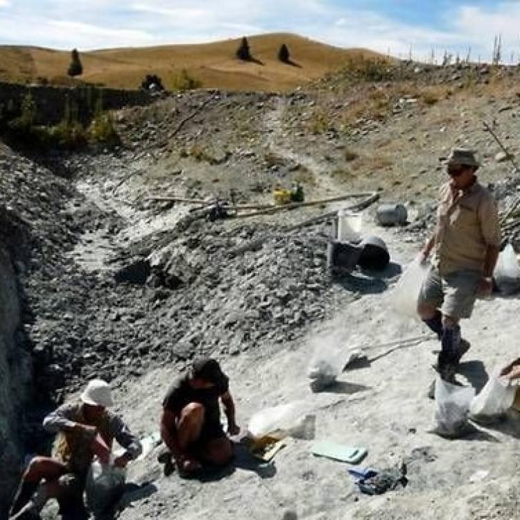 科學家發現2000萬年前蝙蝠化石