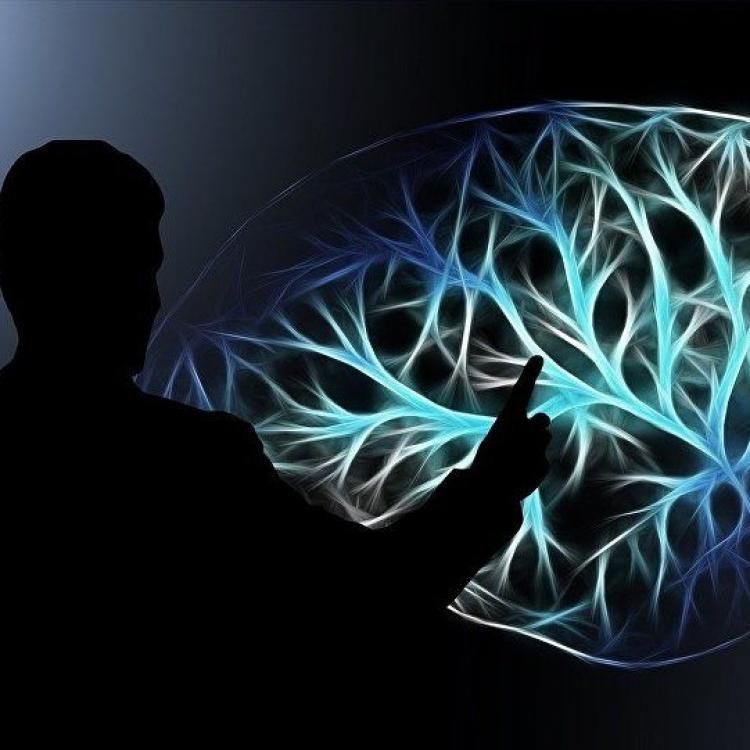學者在人體內找到「第二腦袋」