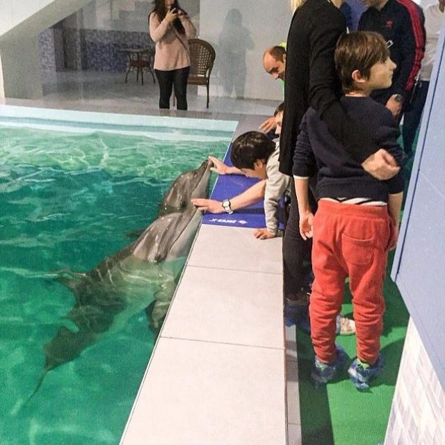 亞美尼亞酒店泳池養海豚惹爭議