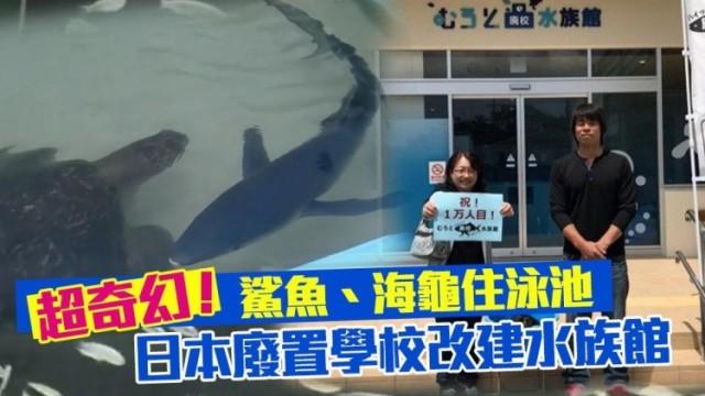 日本廢置學校改做水族館