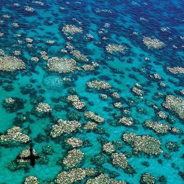 澳洲宣布撥款逾30億救大堡礁