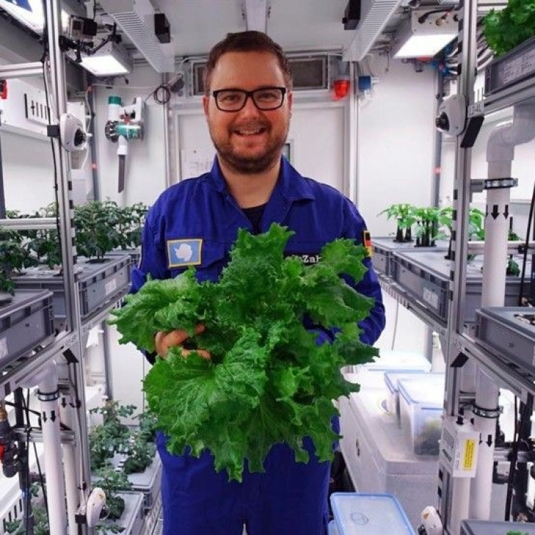 德科學家南極種菜成功收成