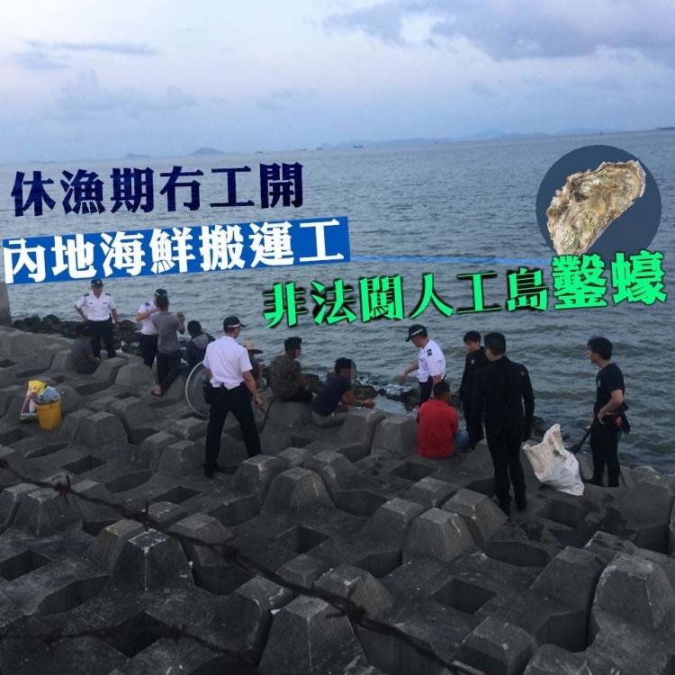 內地海鮮搬運工非法闖人工島鑿蠔