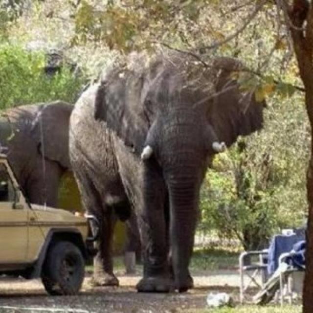 兩歐洲遊客贊比亞被踩死
