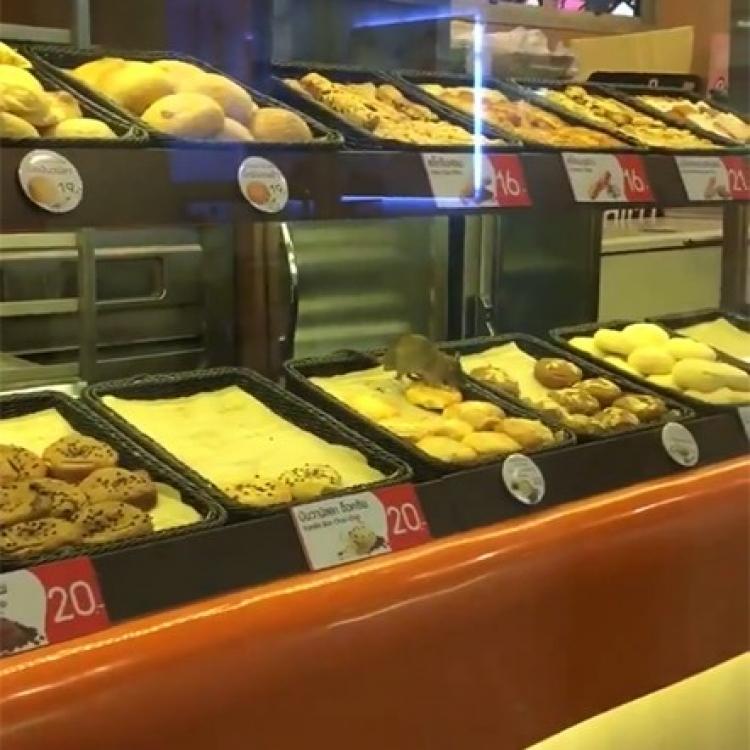 有片!泰核突!「米奇」橫行麵包櫥窗