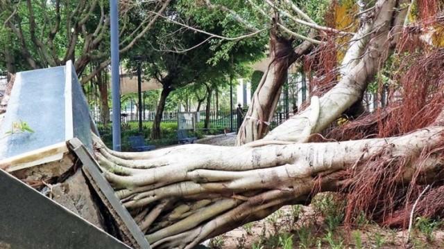 早著先鞭 數千樹木逃過風劫