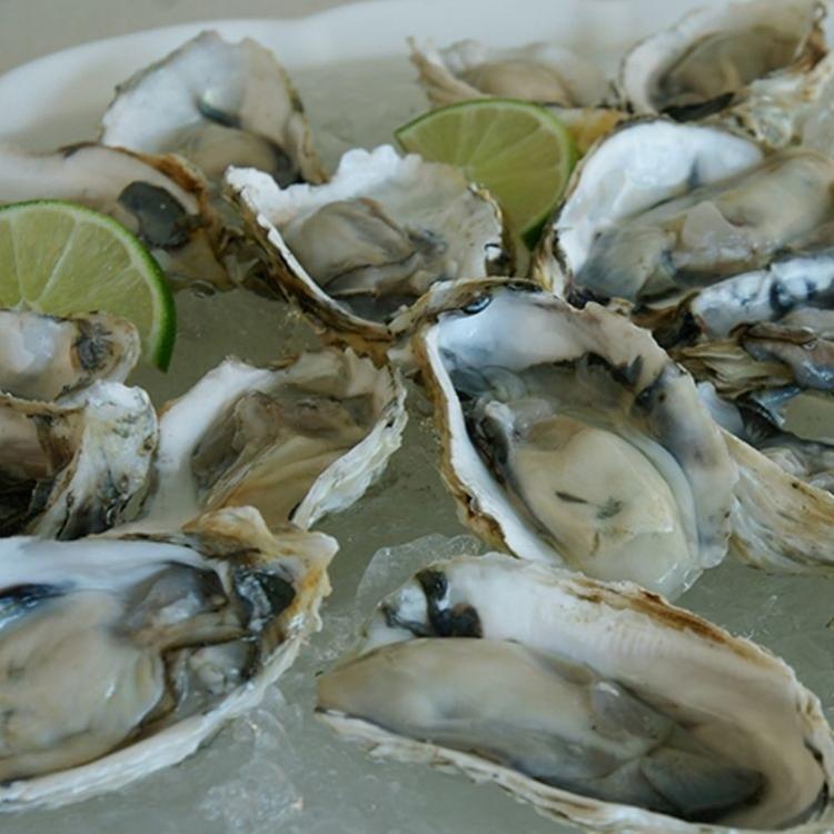 法國一批進口生蠔受大腸桿菌污染
