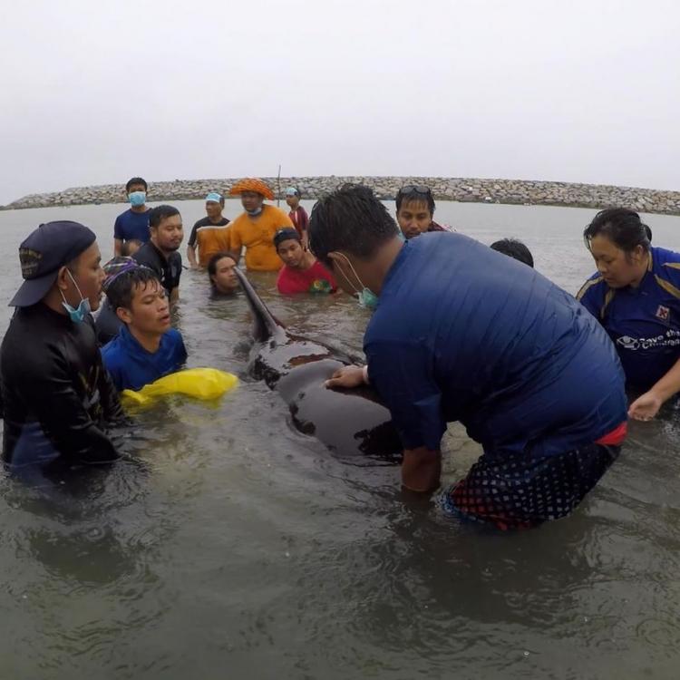 泰鯨魚吞逾80個膠袋慘死