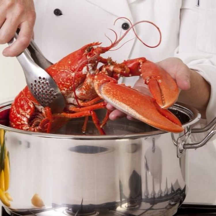 瑞士下月起禁活煮龍蝦