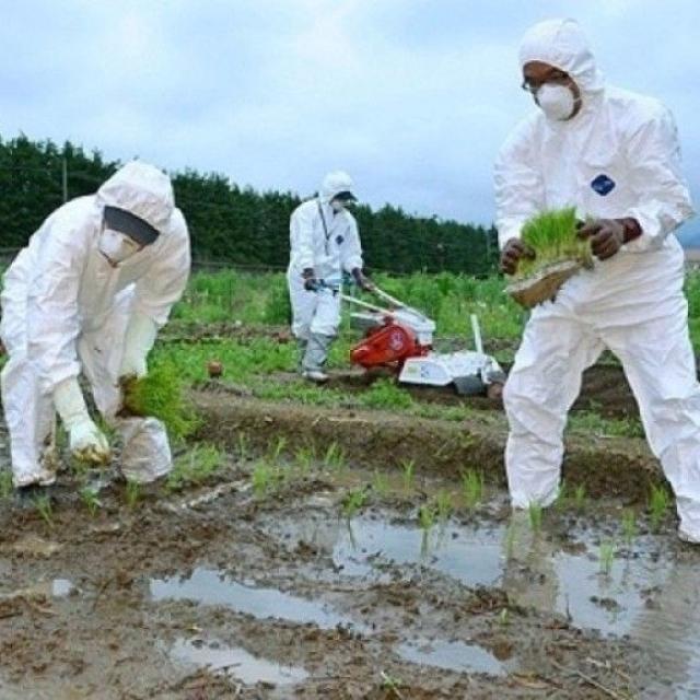 歐盟下月解禁福島米等十縣食品