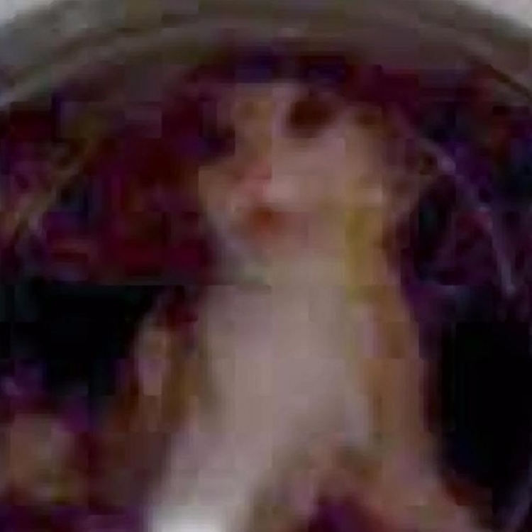 俄漢將寵物貓塞洗衣機高速揈死