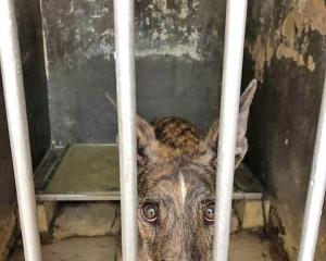 26格力犬下月移居香港