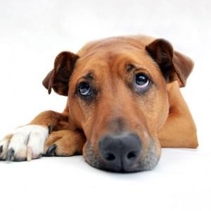 全澳29狗廁所將取消 狗主:增設狗糞箱更實用