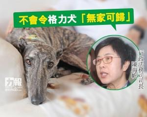 陳海帆:不會令格力犬「無家可歸」