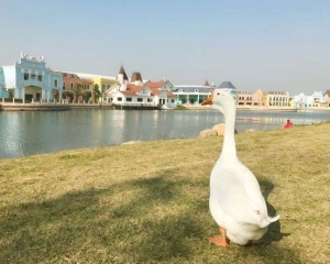 上海學校破格錄取「新生」