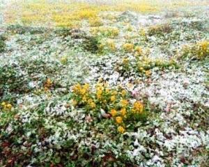 北海道創44年最早初雪紀錄