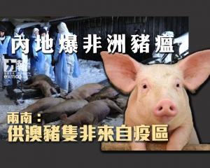 兩南:供澳豬隻非來自疫區