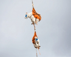 美國家公園直升機助山羊搬屋
