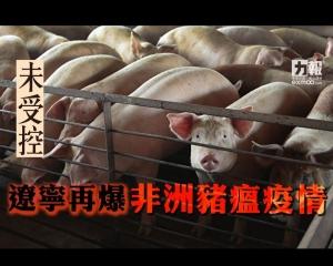 【未受控】遼寧再爆非洲豬瘟疫情