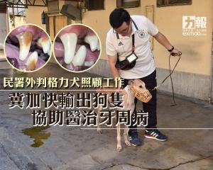 冀加快輸出狗隻協助醫治牙周病