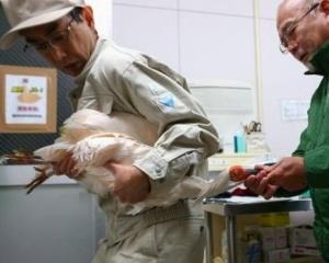 時隔11年 華再贈日本瀕危鳥類朱䴉
