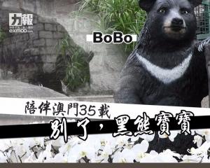 別了,黑熊寶寶