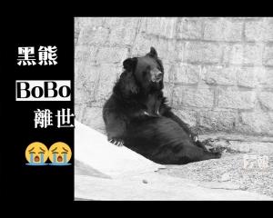 黑熊BoBo離世