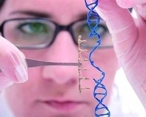 約30個胚胎中70%進行了基因編輯