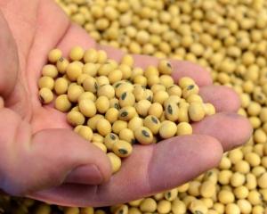 特朗普指中國已恢復購買美國大豆