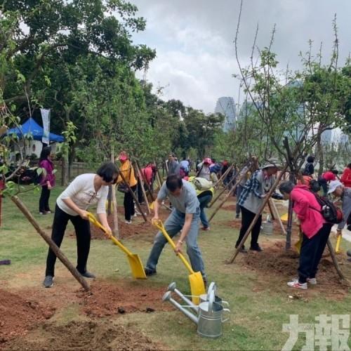 市政署今年擬新植行道樹500棵