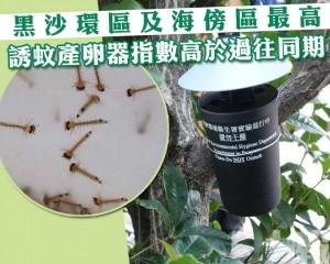 本澳誘蚊產卵器指數高於過往同期