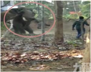 大象暴怒踩死飼養員