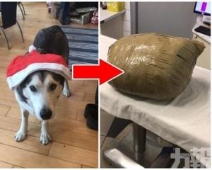 歸來發現狗狗慘死 遺體被捆成包裹