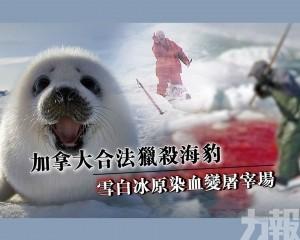 雪白冰原染血變屠宰場