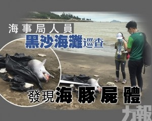 黑沙海灘現海豚屍體