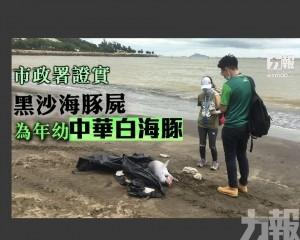 黑沙海豚屍為年幼中華白海豚