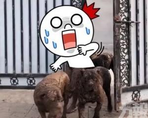 主人出門放狗慘變「兵馬俑」