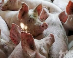 韓國一周內4宗非洲豬瘟
