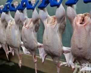 即日起解除對美國禽肉進口限制