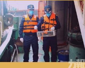 佛山海關查入境船檢活鼠攜漢坦病毒