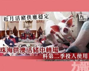 珠海供澳活豬中轉場料第二季投入使用