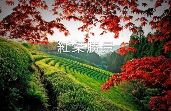 秋色迷人!盤點韓國賞楓熱點