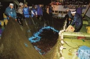 夜海藍光!螢之魷魚觀賞體驗