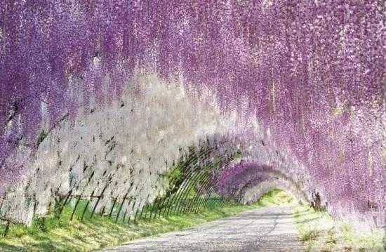 櫻季過後……五月福岡必遊花海
