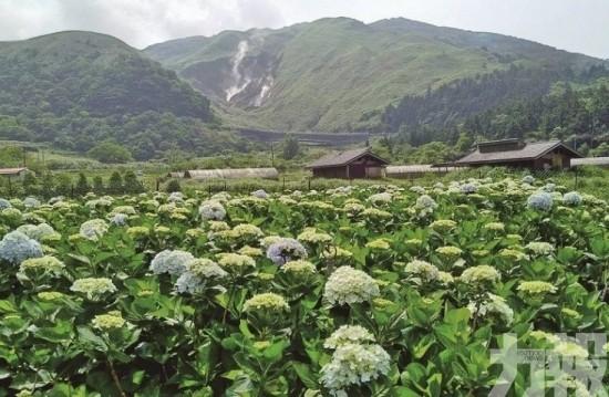 夏日美景!台北必遊繡球花海