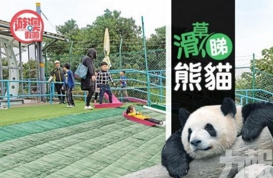 登高。滑草。睇熊貓 春日郊遊好去處