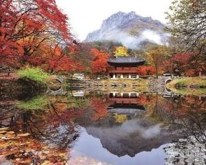 秋遊韓國!三大賞紅葉熱點推介