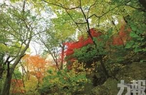 感受初秋浪漫 追擊韓楓 三大勝地