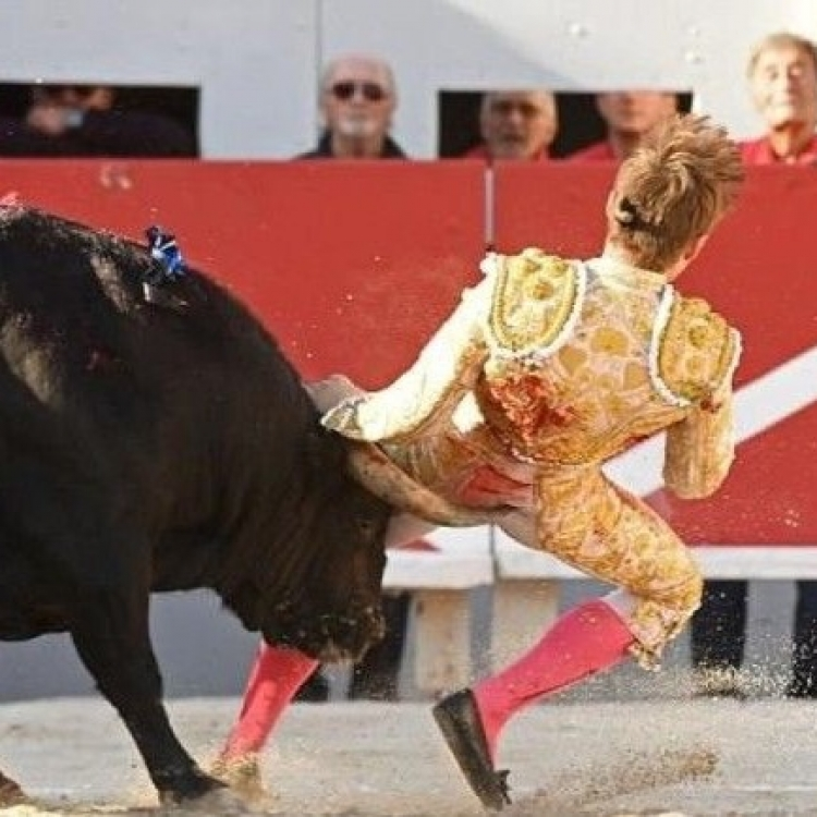 表演鬥牛 法青年不慎被刺傷