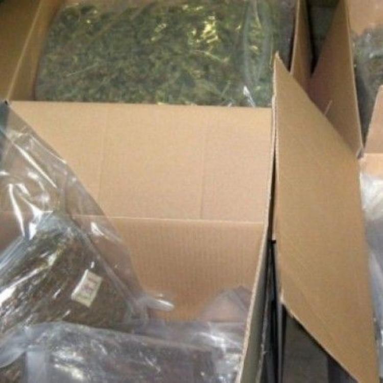 法國公立學校檢獲100公斤大麻